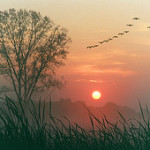 ¡FELIZ AÑO NUEVO!, por David Steindl-Rast
