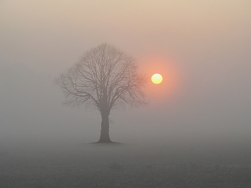 SOBRE EL AMOR, por Krishnamurti