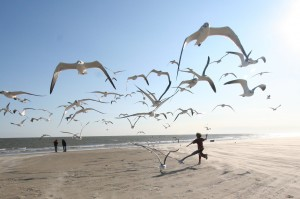 running with the seagulls