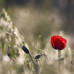 LA BELLEZA Y EL AMOR, por Krishnamurti