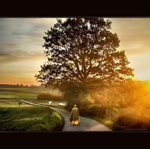Countryside - Lipperland
