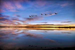 Pre-dawn twilight at Bosque del Apache
