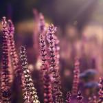 VIVIR AGRADECIDOS, por David Steindl-Rast