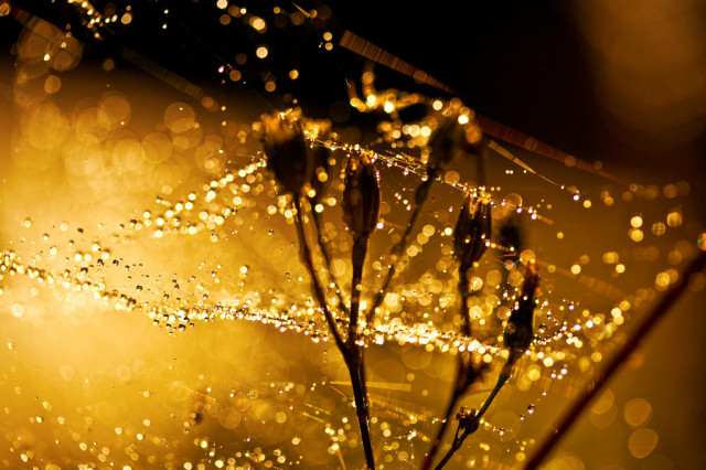 The Smell of Bokeh.