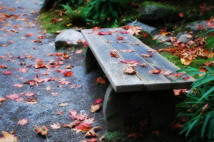 Zen Moment, Seattle Japanese Garden
