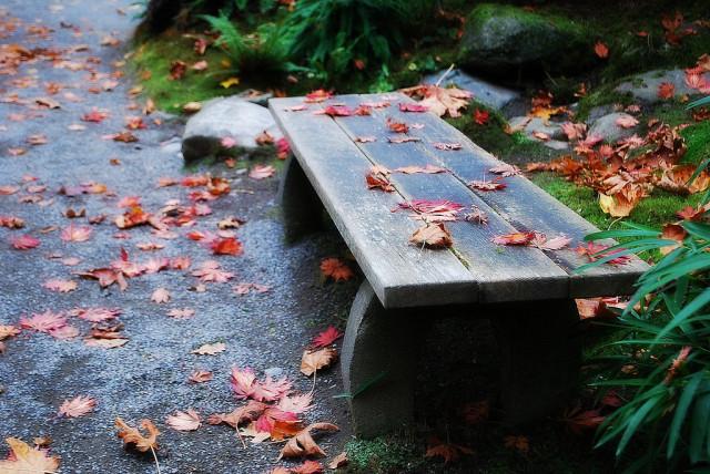 Zen Moment, Seattle Japanese Garden